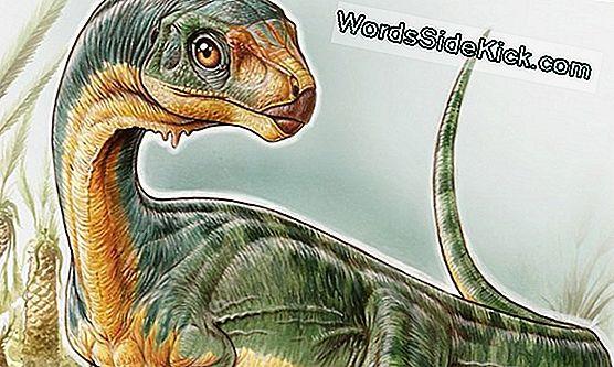 Bizarre Dinosaurus Had 4 'Vleugels', Lange Staartveren