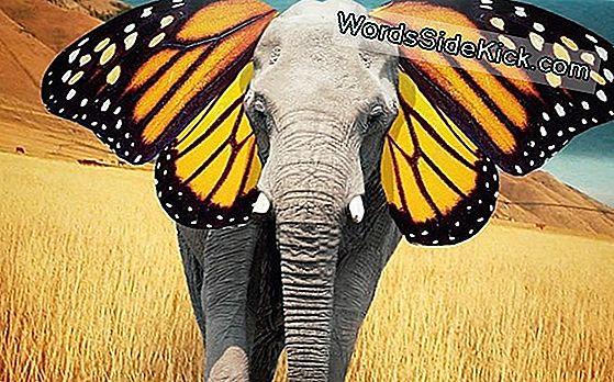 Butterfly'S Wing Ears Detecteert Vogels
