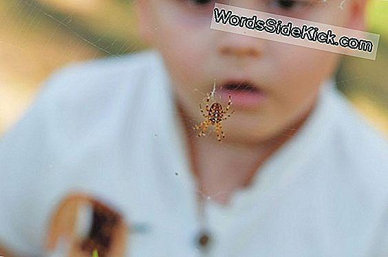 Baby Arachnophobia: Tots 'Angst Voor Spinnen En Slangen Kan Aangeboren Zijn
