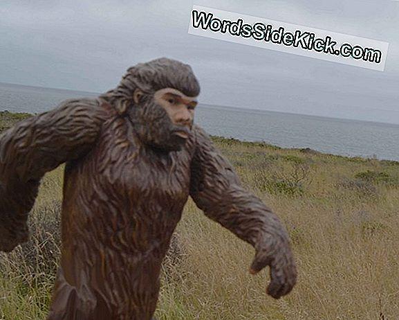 Bigfoot Beschuldigd Voor Vreemde Kreten