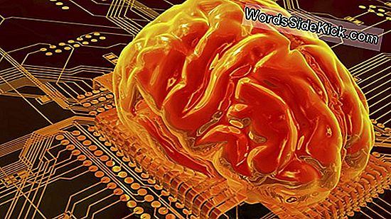 Dit Is Hoe Ruimtevaart De Hersenen Verandert