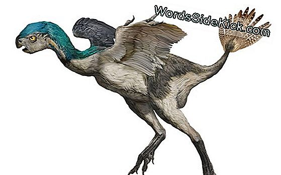 Bird-Like Dinosaur Sported Bizarre Tail Feathers