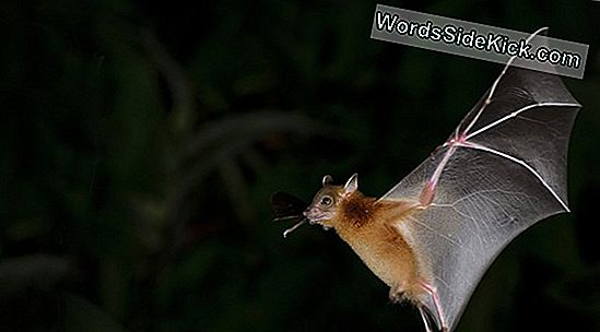 Person Dies From Bat Bite: How Rabies Kills