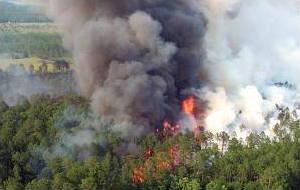 Burning forest releasing smoke.
